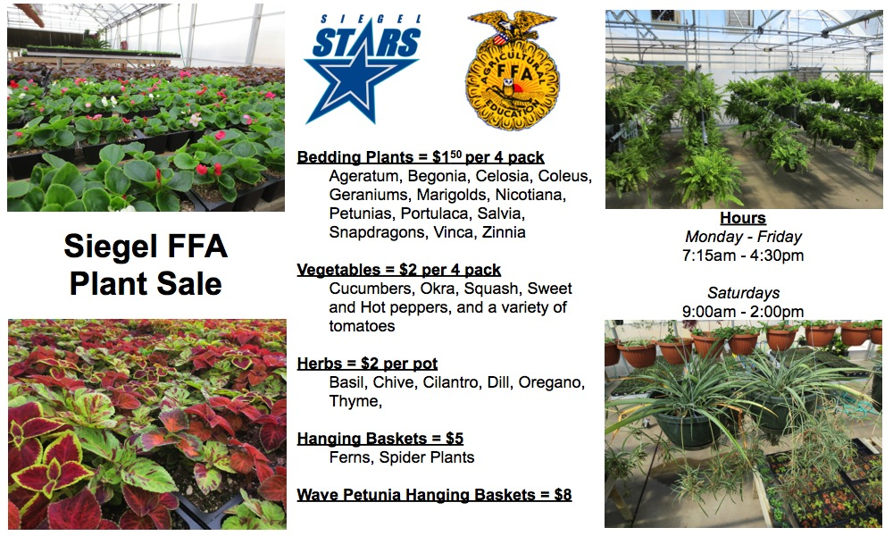 Wonderful ... Fall Vegetable Plants For Sale Online. SIEGEL Chapter Updates